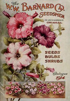 Etiquetas, tags vintage, semillas, flores, vegetales frutas,seeds, flowers, vegetables, fruits.