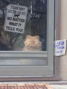 Please don't let the cat out, no matter what it tells you!...Help! Cat needs air!
