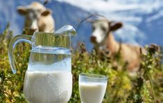 Not Drinking Milk Can Develop Metabolic Syndrome Dairy Free Diet, Milk Cans, Food Safety, Metabolism, Glass Of Milk, Great Recipes, Photos, Canning, Health