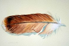 red tailed hawk feather/ tail feather sketch. tattoo idea