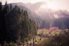 Shanlinsi Forest