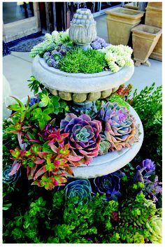 succulents in fountains – what an awesome idea!