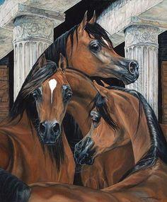 my favorite breed and color. Arabian Art, Arabian Horses, Marwari Horses, Horse Artwork, Cool Artwork, Horse Pictures, Pictures To Draw, Horses And Dogs, Baby Horses