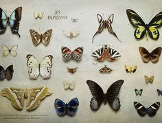 """""""Collections"""" by Peter Lippmann for Cartier Art Magazine"""