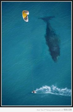 Whale closing in.