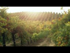 ▶ @Rodney Strong Vineyards Vineyards - Wine's Enthusiast's American Winery of the Year. #sonomacounty #wine