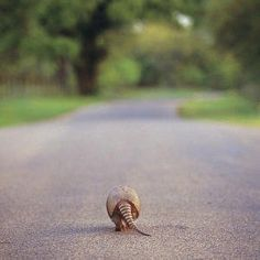Contrary to evidence, armadillos are not born dead on the side of the highway.