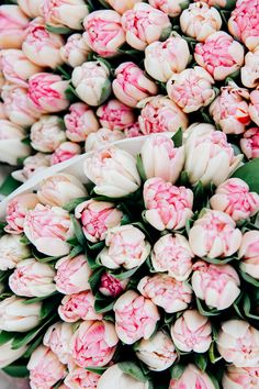 pink and white tulips at a Parisian flower shop