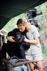 Jane Goodall * Birthday 3 April (1934) * http://en.wikipedia.org/wiki/Jane_Goodall   (Via Anna McGonigal)