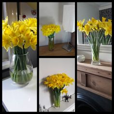 Daffodils! A display in several rooms. Daffodils remind me of spring,