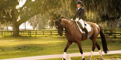 2017 Bliss Award winner Best Equestrian Community of the Year Best Places To Live, Like A Local, Award Winner, Equestrian, Bliss, Florida, Community, Horses, Animals