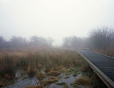 Картинки по запросу Rainham Marshes, London © Peter Beard LANDROOM