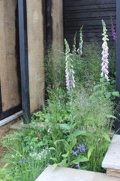 Sommerens blomsterbed Celery, Herbs, Vegetables, Garden, Plants, Summer, Garten, Lawn And Garden, Herb