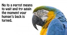 Of course it does.theyre feathered 2 year olds:) Parrot Quotes, Bird Quotes, Animal Quotes, Funny Birds, Cute Birds, Pretty Birds, Flying Birds Tattoo Meaning, Parrot Facts, Funny Bird Pictures