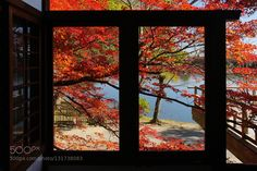 RED LEAVES #PatrickBorgenMD