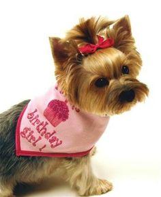 BIRTHDAY GIRL- Dog Party