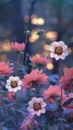 Cute Flower Wallpapers, Rose Flower Wallpaper, Flower Backgrounds, Pretty Wallpapers, Flowers Black Background, Flower Background Wallpaper, Nature Wallpaper, Beautiful Flowers Garden, Pretty Flowers