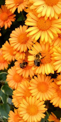 The bees are our friends :-)