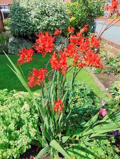 A look inside the Sewing with Love garden :) #garden #greenery #flowers #beautiful #lush #gardening #relaxing #loveyourgarden