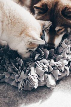Diy Schnuffelteppich Fur Hunde Selber Machen So Geht S Hunde Spielzeug Selber Machen Schnuffelteppich Hund Diy