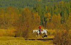 Horseback Riding Gallery ⋆ Western Pleasure Guest Ranch Guest Ranch, Western Pleasure, Horseback Riding, Westerns, Photo Galleries, Activities, Gallery, Painting, Painting Art