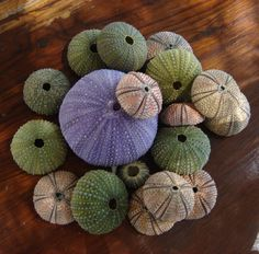 love colorful sea urchins   by ~laurear