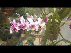 Orquidea plantada no Carvão - YouTube
