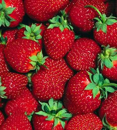 Growing Strawberries – How To Plant And Grow Your Own This Year!