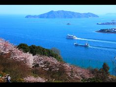 They are Sakura and the sea under their view.