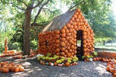 See the best pumpkin patches, corn mazes, hay rides, and other family-friendly fall activities in Nashville. Pumpkin Patch Corn Maze, Best Pumpkin Patches, Pumpkin House, Pumpkin Art, Pumpkin Carving, Beer Festival, Autumn Activities, Beer Garden, Fall Halloween