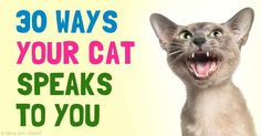 Understanding your cat's vocalizations, facial expressions, and body language can help you understand their communication patterns. http://healthypets.mercola.com/sites/healthypets/archive/2015/08/17/cat-communication-signals.aspx