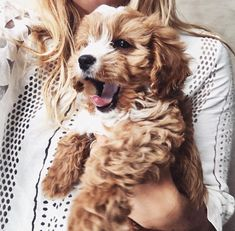 Pets Archives - Furry 'N Cute Puppies And Kitties, Cute Puppies, Cute Dogs, Kittens, Doggies, Puppies Puppies, Cavapoo Puppies, Terrier Puppies, Animals And Pets