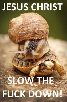 """""""Fast"""" is a relative term. - Imgur"""