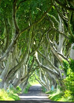 A list of the 20 most amazing things to see in Ireland. Come prepared and don't miss out any of the top tourist attractions and landmarks Travel Usa, Travel Tips, Travel Destinations, Dark Hedges Ireland, Tree Tunnel, Jolie Photo, Best Places To Travel, Ireland Travel, Summer Travel