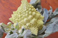 Romanesco cauliflower, Helen's Flower Farm 987 Union Ave., Riverhead Also known as Roman cauliflower, this vegetable tastes very similar to broccoli and has a soft, spongy texture. I love having it as the centerpiece at my dinner table surrounded by smaller vegetables such as mushrooms and heirloom tomatoes. At only $3 a bundle, you may want to pick up more than one to bring as gifts for neighbors and co-workers.