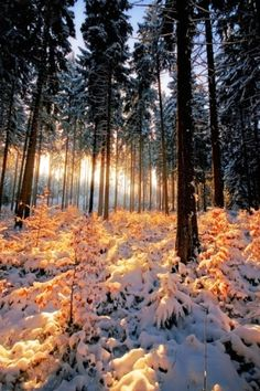 When the evening sun & snow bathe the forest in a particularly beautiful light ., sun When the evening sun & snow bathe the forest in a particularly beautiful light . Winter Szenen, Winter Love, Winter Magic, Winter Sunset, Winter Trees, Beautiful World, Beautiful Places, Winter Beauty, Pics Art