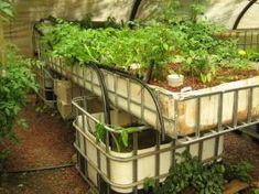 Backyard Aquaponics System Installs. Here at Backyard Aquaponics we've installed over 150 aquaponic systems for people over the past 5 years. From tiny balcony systems through to large 6 bed deluxe systems and just about everything in between. [...]