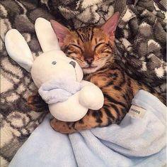 Photo, coisa mais fofa com seu peluche, gato a dormir
