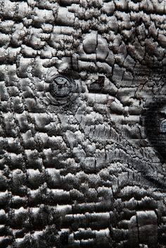 texture bois brulé - NeM architectes