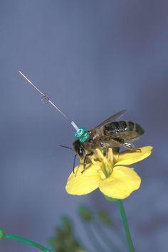 Dancing Bees Speak in Code