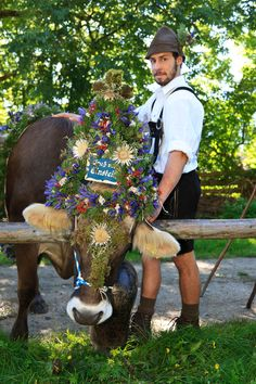 Bavarian with decorated cow - Pfronten im Allgäu Bayern #tracht - Foto by E. Reiter