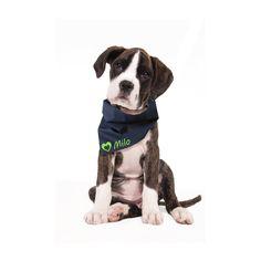 Hundehalstuch mit Wunschname, 9 Farben von pillow beag auf DaWanda.com