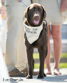 Dog of Honor - Ivory Wedding Dog Bandana with Flowers - Hello Hazel Co.