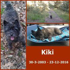 wat een verdriet ons lieve maatje Kiki  is er niet meer voor altijd in ons hart lieverd, wat missen we je,je was een heel speciaal hondje