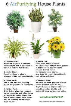 1000 images about air purifying plants on pinterest houseplant house plants and air purifier. Black Bedroom Furniture Sets. Home Design Ideas