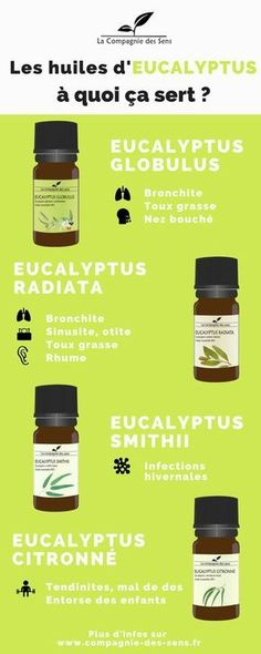 In addition to being the almost exclusive food of koalas (and between us all … Eucalyptus Citronné, Esential Oils, Natural Cosmetics, Better Life, Healthy Tips, Diy Beauty, Home Remedies, Natural Health, Herbalism