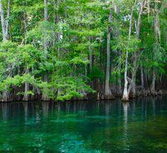 Florida State Parks   Manatee Springs