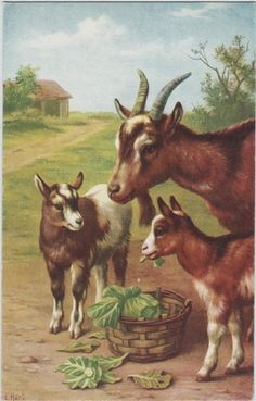 Goats, by artist Edgar Hunt. (I'm thinking of getting a goat, but I don't know what I am getting into.  I've started by pinning this beautiful painting - it's the safe thing to do until I decide to buy a real one!)
