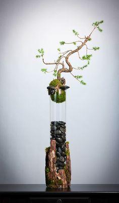Bonsai Display by Donaldo Radovich - Mini Garden Bonsai Tree Care, Indoor Bonsai Tree, Mini Bonsai, Indoor Plants, Indoor Cactus, Cactus Cactus, Indoor Gardening, Air Plants, Terrarium Plants