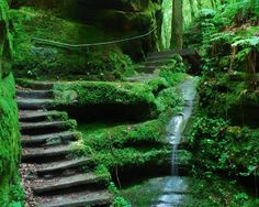 Moss garden staircase